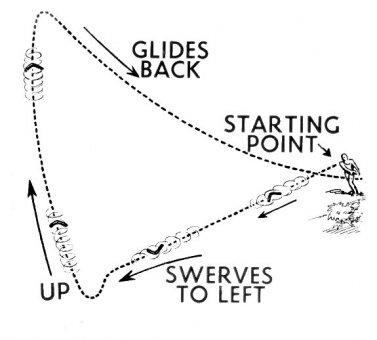 Ako bumerang
