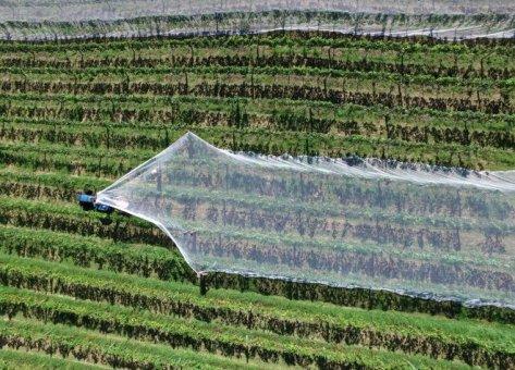 Poľnohospodárstvo novej generácie patrí inovátorom, nie politikom