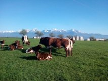 INESS súčasťou platformy pre lepšie poľnohospodárstvo