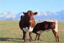 """Slovenské poľnohospodárstvo potrebuje viac ako len """"sebestačnosť"""""""